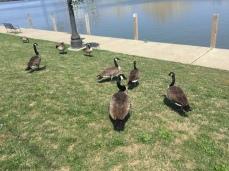 Ducks!!!!!!!!!