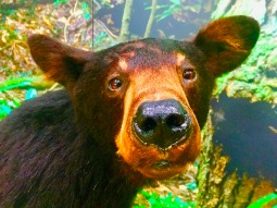 This bear stares a lot!!
