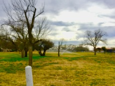 This park could need some more green grass!