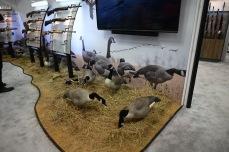 Props of ducks!