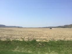 More farming!